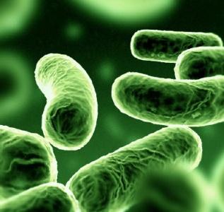 Microbi al microscopio