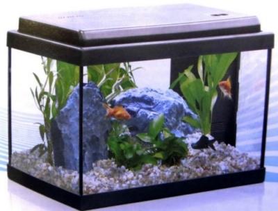 Acquario illuminato a led risparmio e bellezza for Led per acquario