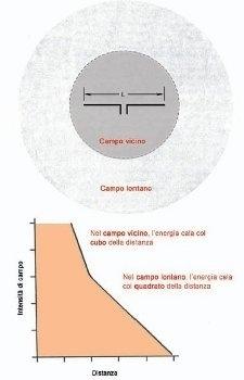 antennne corte