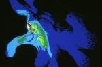 Apparato genitale maschile e le interazioni e sugli effetti delle radiazioni