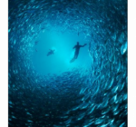 pesci_collettivi