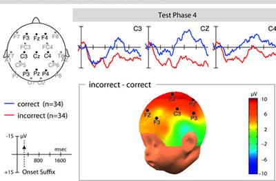 Le regole grammaticali di una lingua straniera vengono intuite istintivamente da un neonato dopo soli 15 minuti di ascolto: lo dimostra l'EEG