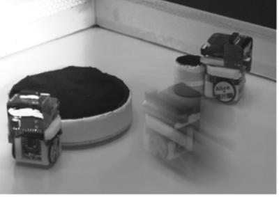 robotica evolutiva:robot e sopravvivenza