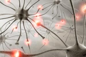 Ciò che l'occhio della rana comunica al cervello della rana_html_m2728851e