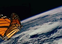 Butterfly-Hurricane