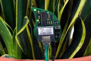 Internet delle cose piante