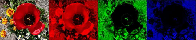 Immagine di un fiore scomposta tramite il modello RGB.
