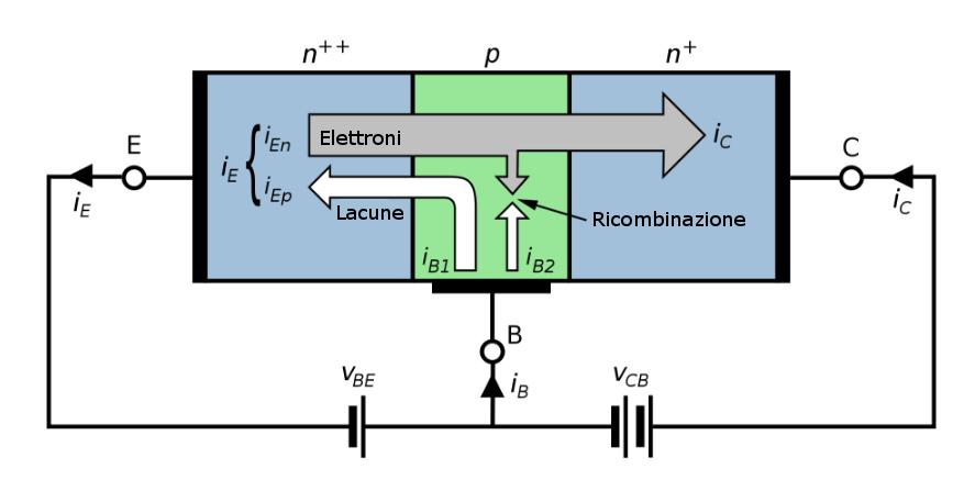 Figura 1: Struttura di un transistore bipolare, due giunzioni drogate in modo diverso vengono collegate tra loro e polarizzate in modo diverso a seconda del funzionamento richiesto.