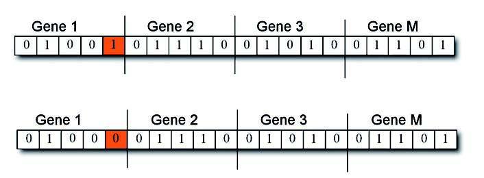 Figura 6: operatore mutazione applicato ad un cromosoma.