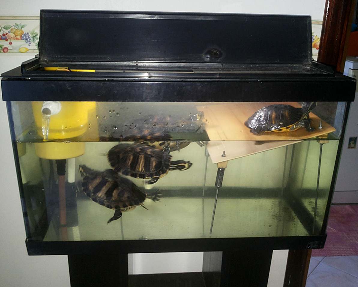 Figura 14: l'acquario completo di filtro