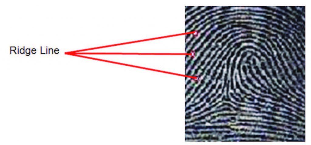 Figura 5: ridge line.