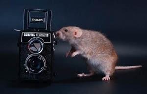 L 'evoluzione della fotocamera