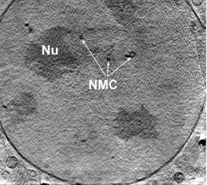 Il microscopio a raggi X permette di vedere anche i dettagli più piccoli delle cellule lasciandole completamente integre